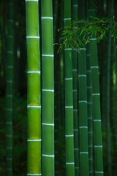 ~~bamboo grove in Tenryu-ji temple, Kyoto, Japan by Damien Douxchamps~~