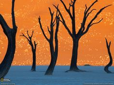 "Namibia - No, the above images are not surrealist paintings. They're photographs of ""dead valley,"" where trees stand against a background of the highest sand dunes in the world. Once a thriving forest, the approaching desert has killed all life."