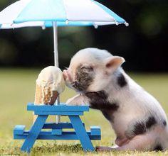 Cutest piglet