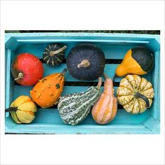 GAP Photos - Garden & Plant Picture Library - Pumpkins, Squashes and Gourds in wooden crate - GAP Photos - Specialising in horticultural photography