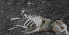 7869, Dead Dogs