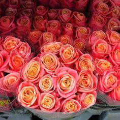 Miss piggy roses - these should be everywhere in life! Lx