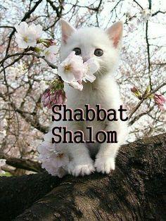 Aww Shabbat Shalom to you too!!!