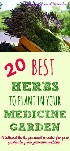 Have you wanted to start a medicinal herb garden? Here are my top favorite medicinal herbs to plant in your garden. Want to grow your own medicinal plants? Here is a list of great herbs to grow, how to grow them, and why you need each one of them in your herb garden.