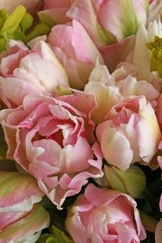 I look forward to Angelique tulips in the garden. Plus they make memorable table arrangements for a tea party, with my Royal Antoinette china.