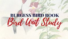 Free Downloadable Sets Of Bird Cards From The Burgess Book For Children There Are 9 Each With 6 Birds FREE