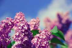 Flor, Aroma, Cheiro, Natureza
