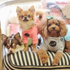 WOOFLINK - Hip designer dog clothes: HAPPY MONDAY ♥