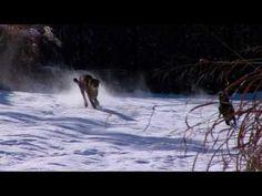 un chien et un guépard jouent dans la neige - http://www.2tout2rien.fr/un-chien-et-un-guepard-jouent-dans-la-neige/