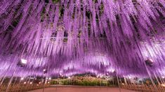 Cherry blossoms aren't the only blooms in season. Here are the most beautiful spring flowers to see in Greater Tokyo Wisteria Bonsai, Strawberry Varieties, White Wisteria, All About Japan, Japan Travel Guide, Travel Europe, Beauty Quotes, Beauty Room, Beauty Blender