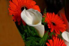 bouquet 1 by ~mariustipa on deviantARThttp://browse.deviantart.com/art/bouquet-1-159908202