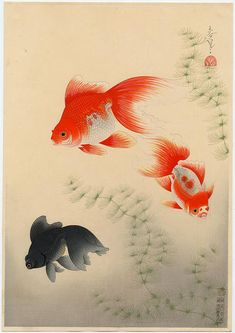 View and purchase art by Bakufu Ohno and other Japanese artists. Japanese etchings, wood block, silkscreen, stencil from famous artists. Japanese Art Styles, Japanese Artists, Koi Art, Fish Art, Koi Kunst, Watercolor Fish, Fish Drawings, Japanese Illustration, Animal Sketches