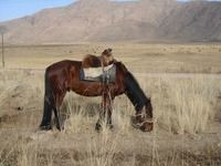 Where did humans first ride horses? West Kazakhstan.