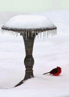 Snow Photograph - No Bath Today by Kristin Elmquist Winter Szenen, I Love Winter, Winter Magic, Winter Christmas, Winter Season, Christmas Feeling, Winter Colors, Gray Garden, I Love Snow