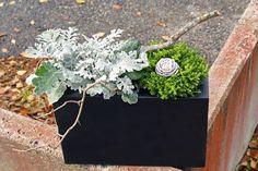 holmsunds blommor: Höstplantering