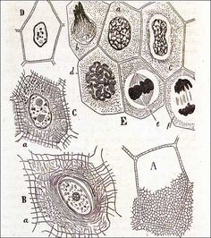 Grabados relativos al tejido epitelial del 'Manual de histología' de Cajal Peter Randall Page, Cell Forms, Cell Structure, Medical Art, Body Organs, Mark Making, Pattern Drawing, Land Art, Color Patterns