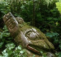 This was found and photographed by Barry Herem on Prince of Wales Island, SE AK. Bottom 1/2 of old Haida grave monument -a sea wolf and raptor figure. This whole area was later clear cut and all vegetation removed. Photo received hon. mention by Archeaology Magazine. via Barry Herem FB
