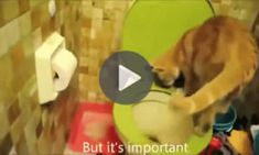 An Educated Cat Is Showing How To Properly Use Toilet.