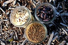 The UCSC Seed Library was started in 2011 by Whitman, a fourth year History major at UCSC, as a way to catalog and preserve local seed varieties, in order to combat the increasing homogeny that comes from commercial growing. / Just funded by Jenny Lee's project Awesome Food