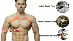 (Fitness Workouts Chest)
