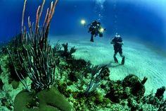 Los arrecifes de coral de Florida tienen los días contados – Blog COBCM