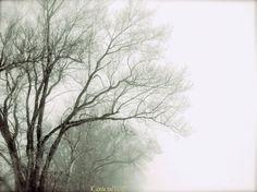 Foggy Landcape Photography, Black and White Print, Winter, Trees, Minimalist - The Winter's Fog 8x10