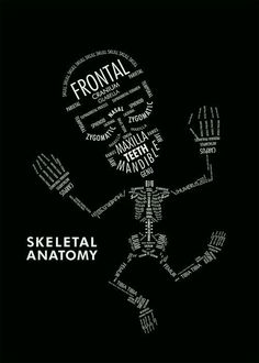 SKELETAL ANATOMY by Amy Kwan An informational poster displaying the hierarchy and organizational relationships with typography. In this case, type serves as both image and information on the skeletal anatomy.makes me think of xray school Med Student, Anatomy Art, Human Anatomy, Rad Tech, Information Poster, Medical Assistant, Medical Billing, Anatomy And Physiology, Medical School