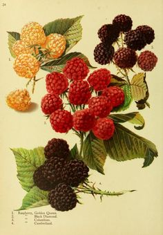 Trees and plants for the world out of doors. - Biodiversity Heritage Library