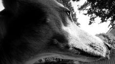 Hond : pippi