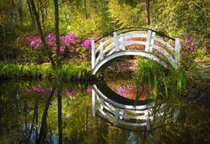 Three centuries of beauty and history are on display at the Magnolia Plantation and Gardens
