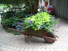 Shady garden plants such as Hostas, potato vine etc. look great here along with this gorgeous wheelbarrow.
