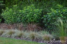 Ogródek Agam - strona 187 - Forum ogrodnicze - Ogrodowisko