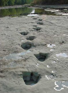 "Ancient dinosaur tracks ""made in Texas"" by Texas dinosaurs ;-)  Go see Dinosaur Valley State Park, Glenrose, Texas"
