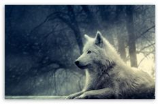 #White #Wolf #Painting #wallpaper