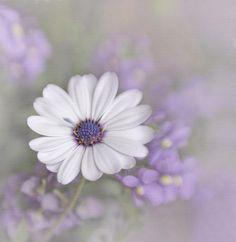 www.oksana-rus.com • #purple #art #artdeco #interior #luxury #beauty #magic #makeup #fashion #nature #travel