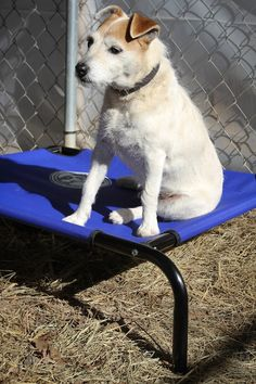 Donate a pet bed to a rescued Jack.
