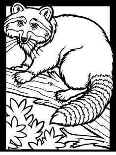 Color Racoon Animals Of The Wood, Coloring Pages For Adults And Teenagers  Free High Quality And Divided Into Categories