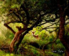 Deer in Tapada de Mafra (2014) Portugal, Animals, Animales, Animaux, Animal Memes, Animal, Animais, Dieren