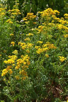 Wrotycz Herbs, Garden, Plants, Hibiscus, Garten, Lawn And Garden, Herb, Gardens, Plant