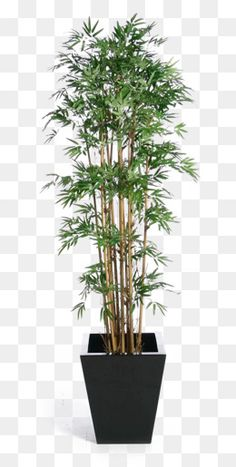Iphone Background Images, Studio Background Images, Textured Background, Bamboo Landscape, Landscape Elements, Photoshop Rendering, Photoshop Design, Bamboo Plants, Green Plants