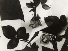 Florence Henri, Nature morte, 1931, Paris, MNAM Florence Henri, Art Moderne, Kandinsky, Futuristic, Beautiful Flowers, Mood, Paris, Portrait, Photography