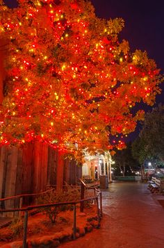 Interesting facts about The Halloween Tree at Disneyland and Ray Bradbury's friendship with Walt Disney!