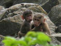 Four monkeys are scheduled to be sent on a suicide mission to Mars in 2017. The monkeys will  endure inhumane tests, dehydration, emotional stress and death. Take action to save these exceptional animals from a horrible death.