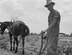 Eyes of the Great Depression 007 -- Oldest son of sharecropper family at work in the cotton near Chesnee, South Carolina 1937 June; photo by Dorothea Lange. http://www.zazzle.com/exit78/at+work+in+the+cotton+gifts  http://www.zazzle.com/exit78* (pinned by haw-creek.com)