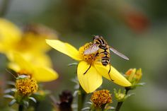 #buzz around