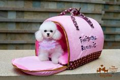 KOJIMA Design-New Color Cute Cozy Soft Carry Bag House Bed For Small Dog Puppy Cat Kitten 15.7' x 13.4' x 15.7' > Can't believe it's available, see it now : dog beds