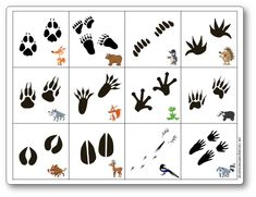 Memoir game of forest animal footprints - animals 4 Year Old Activities, Preschool Learning Activities, Infant Activities, Web Animal, Animal Footprints, Animal Tracks, Forest Friends, Wallpaper Pictures, Forest Animals