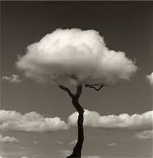 Afbeeldingsresultaat voor black and white photographs