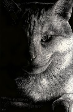 Cat Study - Scratch Board - Nathan H Perry