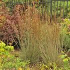 25 Top Easy-Care Plants for Midwest Gardens | Midwest Living